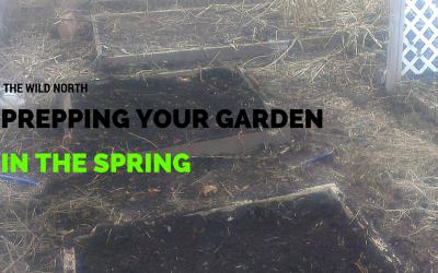 Gardening: Prepping your garden in the Spring