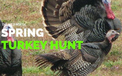 Spring Turkey Hunting