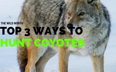 Top 3 Ways to Coyote Hunt
